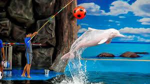 Visit Pattaya Dolphin World