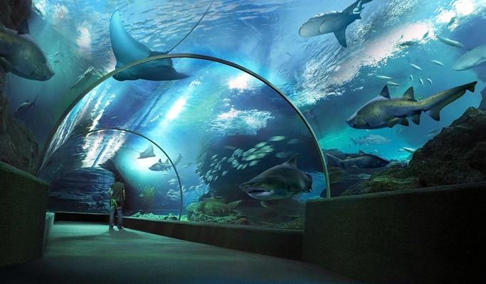 Marine life at Southeast Asia's largest aquarium – Sealife Bangkok