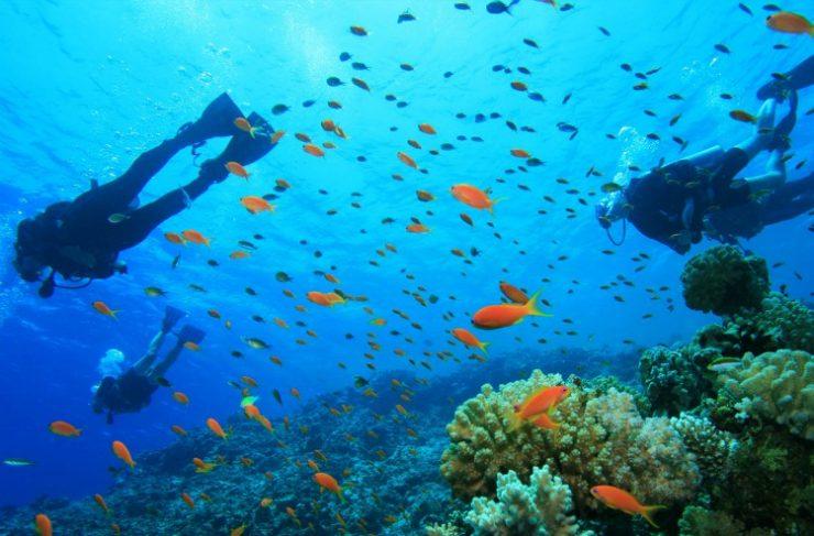 Scuba Diving in Phi Phi Island